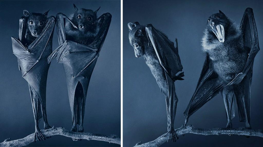 Британский фотограф-анималист Тим Флэк показал «неестественный отбор»