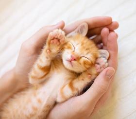 5 причин завести кота