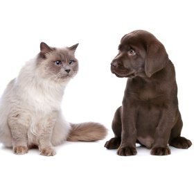 О чём должен знать каждый владелец домашнего животного?