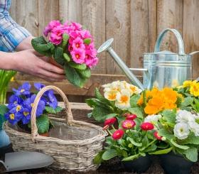 Уход за цветами как способ психотерапии